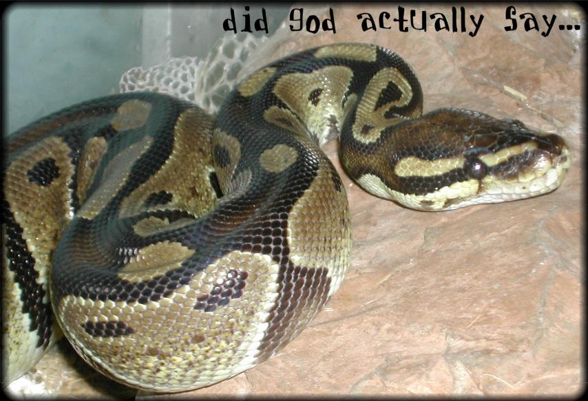 apollo symbol python - photo #3